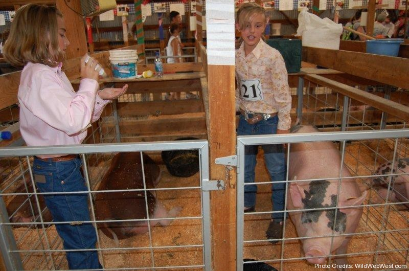 Girls tending to their 4H pigs